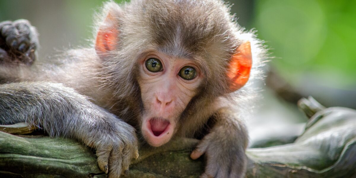 Про що книга Денні Грегорі «Стуліть пельку своїй мавпі?»