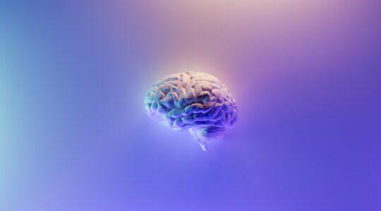 Що потрібно мозку для продуктивності?